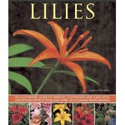 Lilies. An Illustrated Guide to Varieties, Cultivation and Care, with Step-by-step Instructions and Over 150 Stunning Photographs, Paperback/Andrew Mikolajski