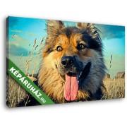 Kutya a farmon (40x25 cm, Vászonkép )