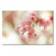 Foto op canvas Cherry Blossoms