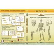 Szkielet człowieka - program multimedialny