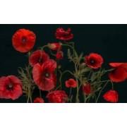 Tablou Canvas Maci rosii 80 x 50 cm Rama lemn Multicolor