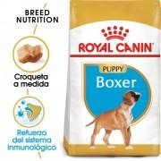 2x12kg Boxer Junior Royal Canin pienso para perros
