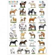 Hjelms Poster ABC Hästar