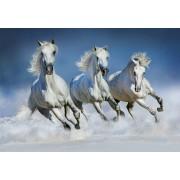 W + G Wizzard and Genius Fotobehang Arabische Paarden