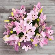 Brindisi-Flores ao domicílio