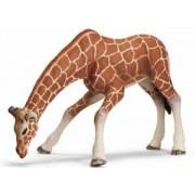 Schleich Wild Life: Giraffe Female, Drinking