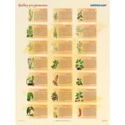 Rośliny przyprawowe - plansza