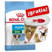 Royal Canin Size y Breed 3 a 4,5 kg + Contenedor de pienso Royal Canin ¡gratis! - Mini Junior (2 x 2 kg)