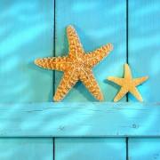 Print achter glas Starfish