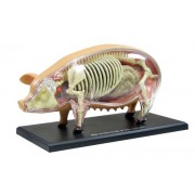 Pig Anatomy Model 4D VISION