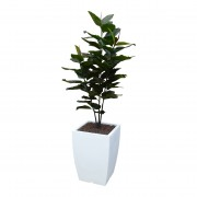 @GAAF Kunstplant Ficus elastica