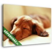 Alvó kutyus a kanapén (35x25 cm, Vászonkép )