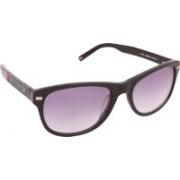 Tommy Hilfiger Wayfarer Sunglasses(Violet)