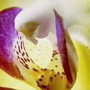 Sony LED TV 189 cm 75 palec Sony BRAVIA KD75XG8096 en.třída A (A+++ - D) DVB-T2, DVB-C, DVB-S2, UHD, Smart TV, WLAN, PVR ready, CI+ černá