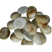 laxmi pratik Gomati Chakra Stoneware Yantra (Pack of 21)