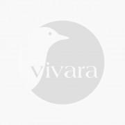 Buzzy Bio Organic Buzzy® Organic Lathyrus odoratus Painted Lady (BIO)