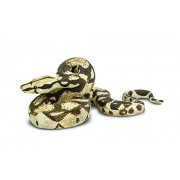 Safari Ltd Boa Constrictor