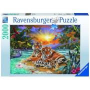 Puzzle Tigri, 2000 piese