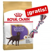 Royal Canin Breed 9 a 12 kg + Cuerda Trixie multicolor ¡gratis! - Labrador Retriever Puppy / Junior (12 kg)