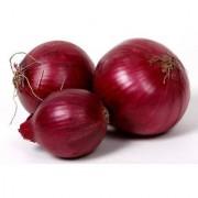 Seeds Dark Red Hybrid Onion Premium Exotic Seeds For Kitchen Garden