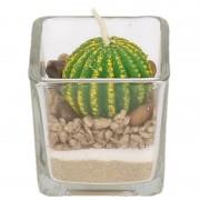Geen Bolcactus kaarsje in glas 5 cm