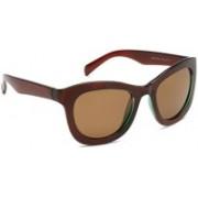 Daniel Klein Wayfarer Sunglasses(Brown)
