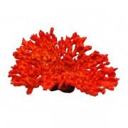 Decoratie Koraal rood