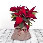 Red Nose Flores a domicilio