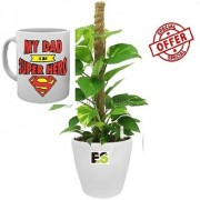ES MONEY PLANT WITH MOSSTICK DECORATIVE With Freebies Mug