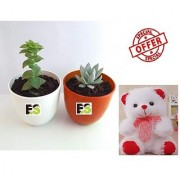 ES SECCULENT PAIR DECORATIVE WITH FREE COMBO GIFT - 6 inchTEDDYBEAR