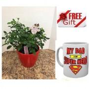 ES ELEGENTS MINIATURE ROSE ALL SEASON PLANT With Freebies Mug