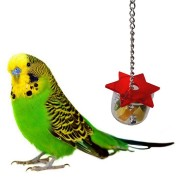 Hanging Cage Swing Chew Bird Feeding Box Parrot ForagingHex Star Acrylic Pet Toys