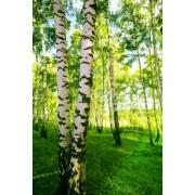 janbussan Naklejka charakter, lato, las, krajobraz, na zewnątrz