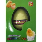 Hatching Chicken Egg