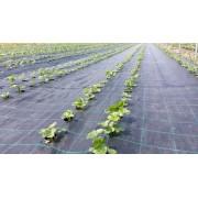 Agrotextil antiburuieni 4.20*100 m, negru