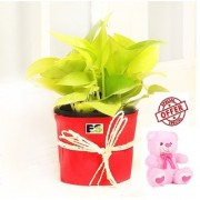 ES LUCKY MONEY PLANT DECORATIVE WITH FREE COMBO GIFT - 6 TEDDYBEAR-PINK
