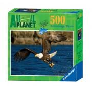 Ravensburger Animal Planet: Bald Eagle - 500 Pieces Puzzle