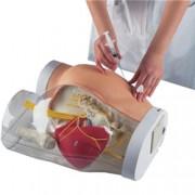 simulatore gluteo per esercitazioni iniezioni intramuscolari - peso 6,