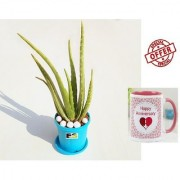ES Aloe Vera Gift Plant With Gift Anniversary Gift Mug