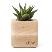 UrbanWood Květináč SUCUBE se sukulentem Haworthia limifolia - UrbanWood