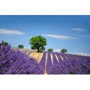 felinda Plakat piękno, lato, piękny, purpurowy, magenta