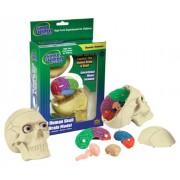 Wild Republic Science 3D Human Skull Brains