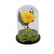 Trandafir criogenat in cupola MagazinulCuPlante.ro 21 cm Galben
