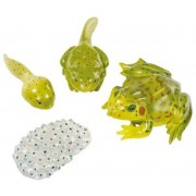 Żaba - figurki cyklu rozwojowego
