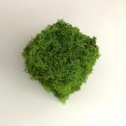 Cub decorativ cu licheni stabilizati