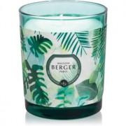Maison Berger Paris Immersion Fresh Eucalyptus lumânare parfumată 240 g