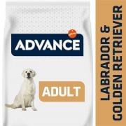 Advance Labrador