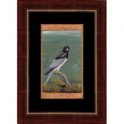 Mughal Period Bird of Grey-headed Fish Eagle Indian Miniature Painting on Old Court Stamp Paper with Frame