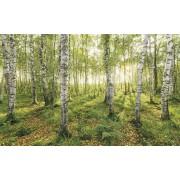 Komar Birch Trees Vlies Fotobehang 400x250cm 4-banen