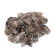 Magideal 50PCS Lots Dyeing Guinea Hen Feather Feathers 5-10cm Nature